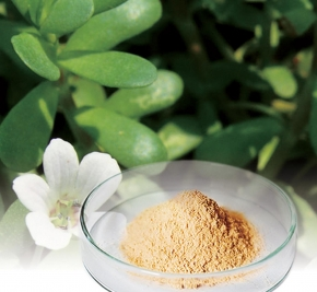 BacoMind® Bacopa Extract